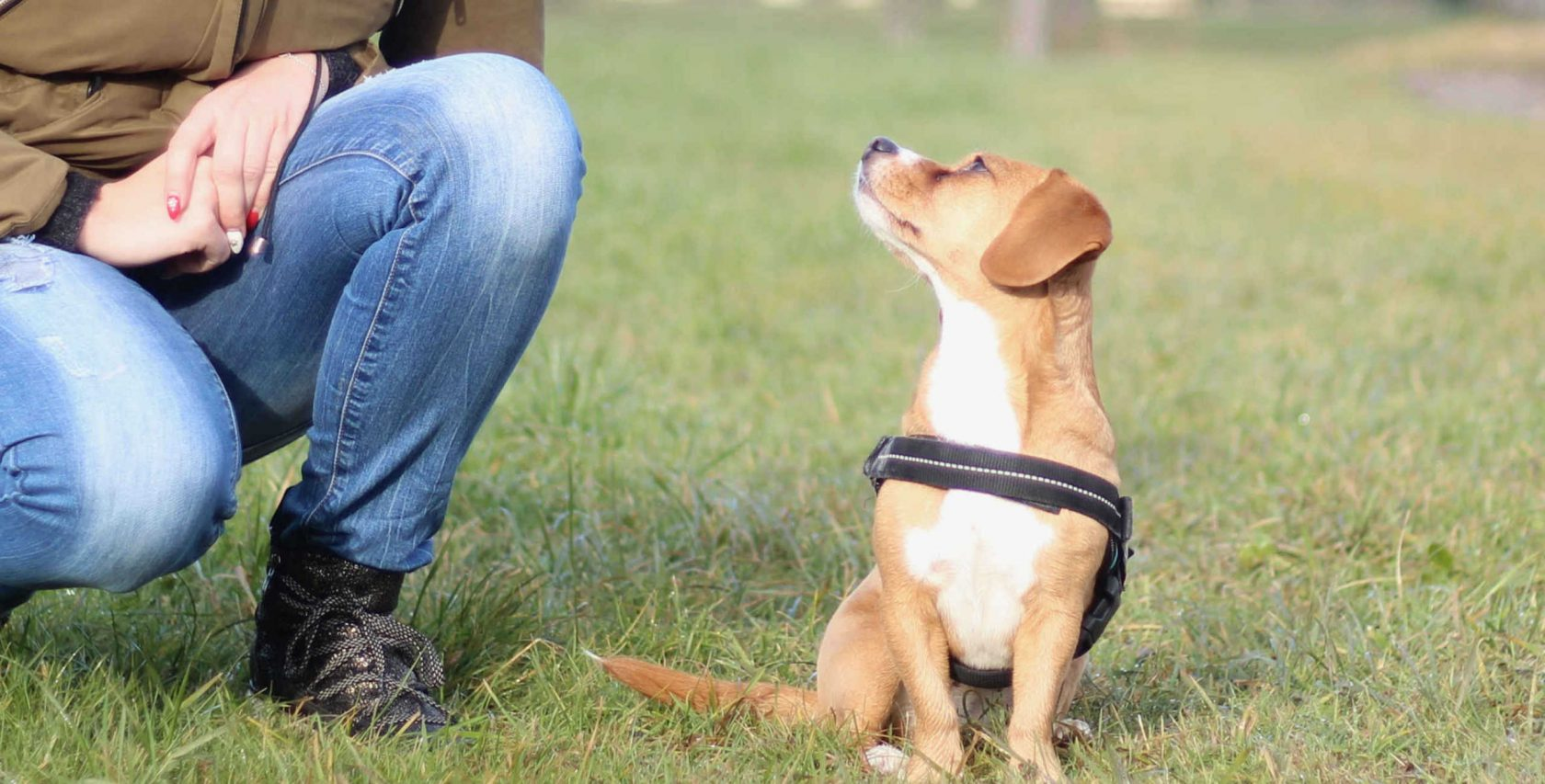 Hundetraining Pfoten Bande Waldkraiburg Hundeschule